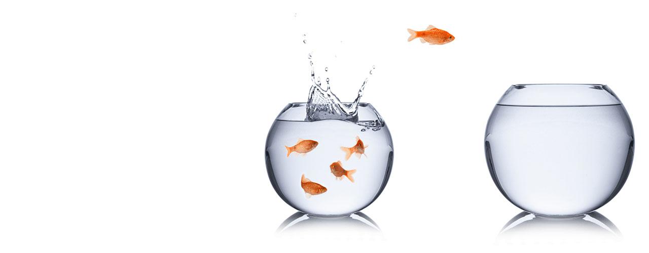goldfish_1280x500